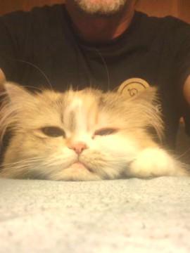 Katzenselfie | CC BY 4.0 HuWutze